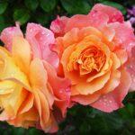 5 fiori e il loro significato più nascosto